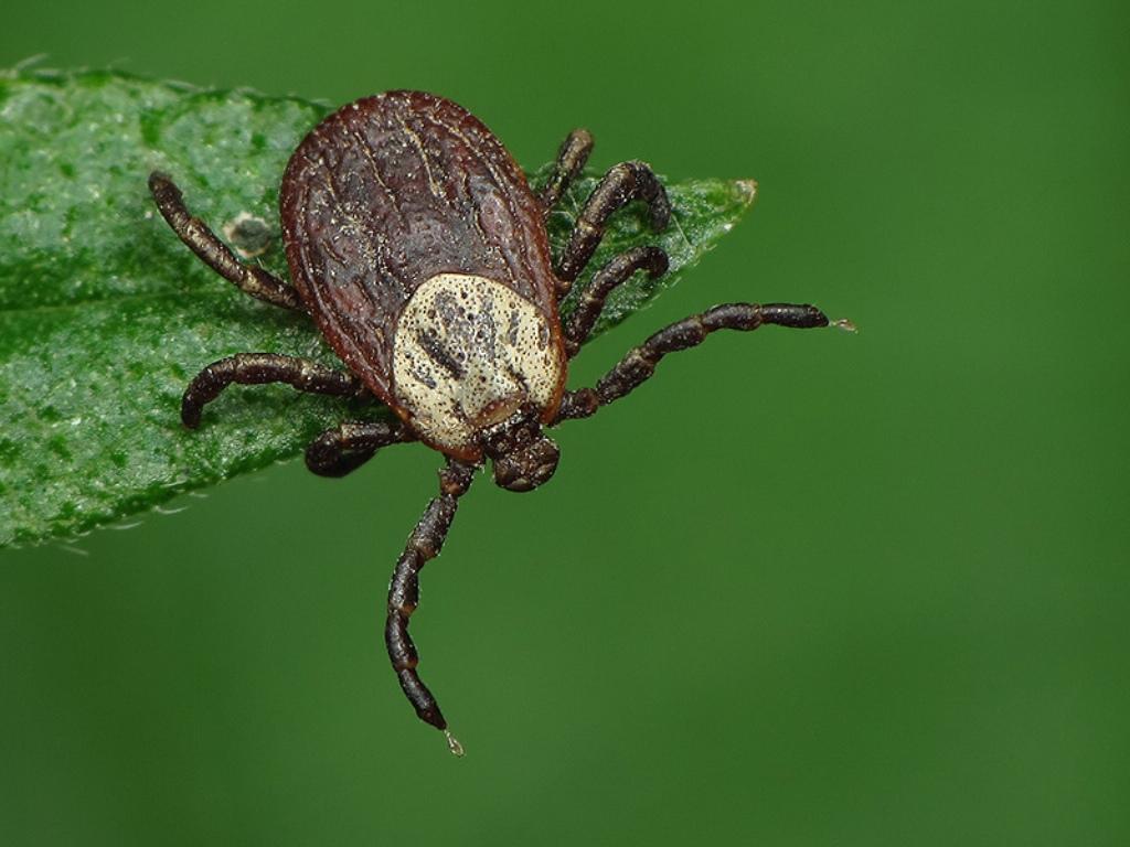средство от колорадского жука народное